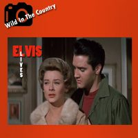 wild-in-the-counttry
