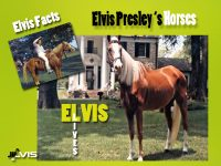 elvis-and-horses